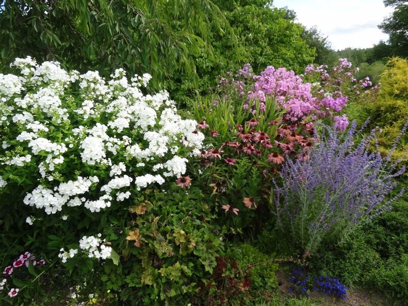 Garden phlox and more