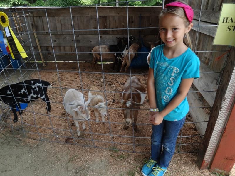 Heath Fair and mini goats