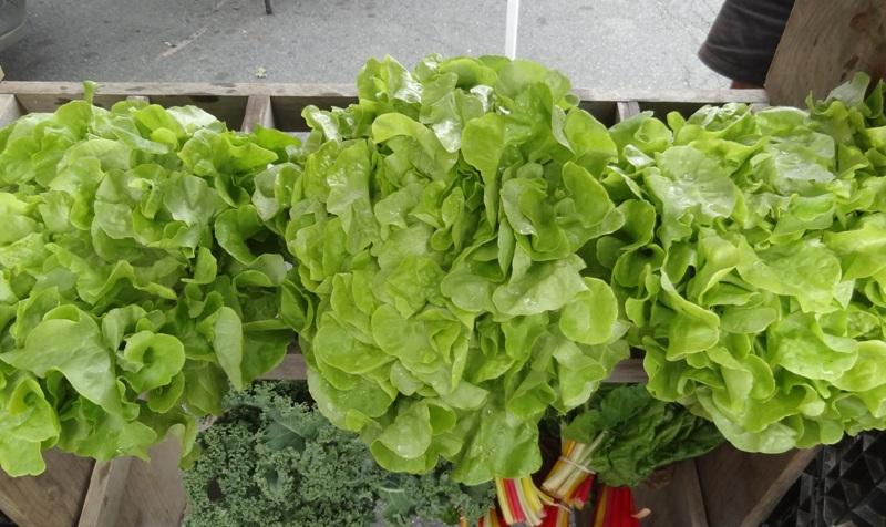 Encino lettuce