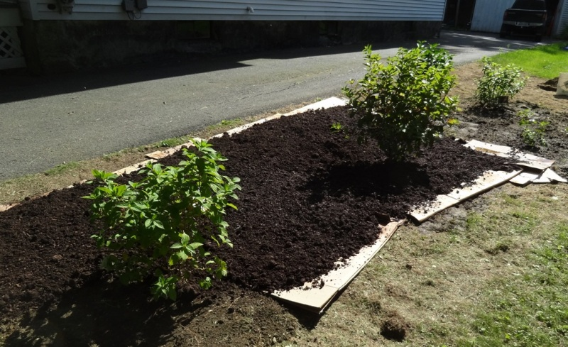 Compost and loam on cardboard
