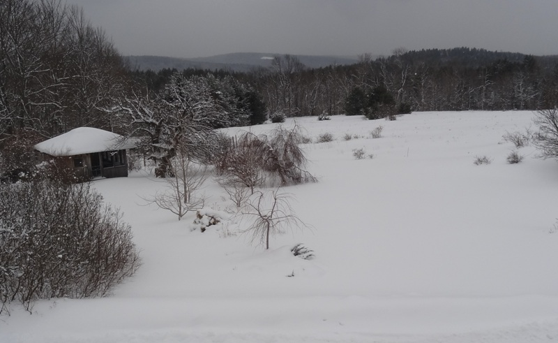 View from the bedroom window February 5, 2015