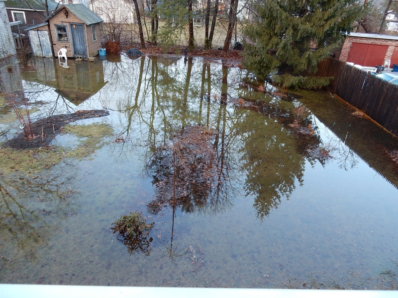 Reflections on flooded garden