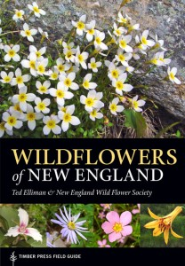 Wildflowers of New England by Ted Elliman
