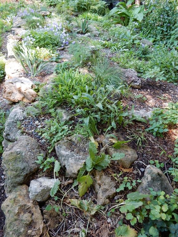 Scree Garden