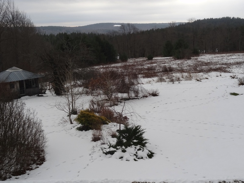 View from the window in Heath, MA, where the Commonweeder was born in 2007