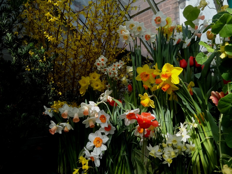 Smith College Spring Bulb Show